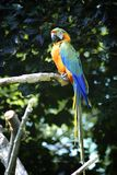 macaw stockfotos