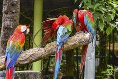 macaw Stock Foto