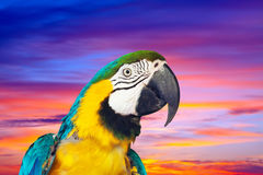 Macaw against sunset sky Stock Photo