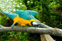 Macaw auf dem Zweig lizenzfreie stockfotos