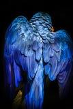 Macaw Azul-y-amarillo Fotos de archivo