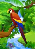 Macaw bird Royalty Free Stock Photography