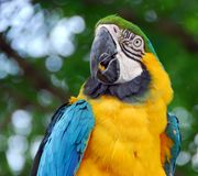 Macaw bird Stock Images