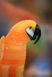 Macaw bird Stock Photos