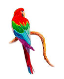 Macaw bird on a branch. Painting on paper colorful of Macaw bird  on a branch and emotion on the white background. Watercolor hand painted Royalty Free Stock Photos