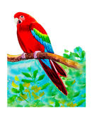 Macaw bird on a branch,and roses amidst beautiful nature. Stock Photo