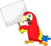 Macaw bird cartoon with blank sign Stock Photos