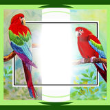 Macaw bird couple birds on a branch amidst beautiful nature. Royalty Free Stock Images