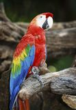 Macaw Bird in nature Stock Image