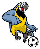 Macaw bird playing soccer Stock Image