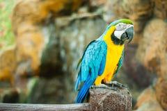 Macaw Bird Royalty Free Stock Photos