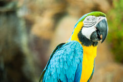 Macaw Bird. A Macaw bird resting on fence Stock Photography