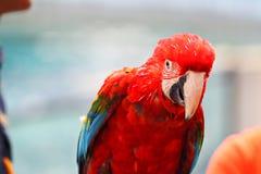 Macaw Bird [Scarlet Macaw] sitting on log Stock Photos