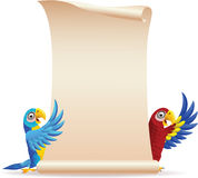 Macaw bird with scroll paper stock photo