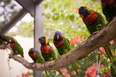 Macaw bird sitting on the perch. Beautiful colorful parrots sitting on log in exotic garden. Zoo stock image