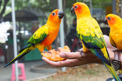 Macaw bird sitting on the perch Stock Images