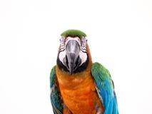 Macaw bird Royalty Free Stock Photography