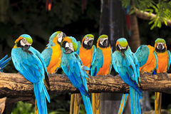 Macaw birds Stock Images