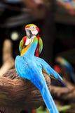 Macaw birds Stock Image