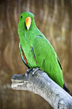 Macaw on branch Royalty Free Stock Images