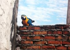 Macaw in brick wall. Beautiful blue macaw on a brick wall Royalty Free Stock Photos