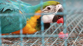 Macaw in a cage stock footage