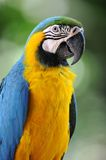 Macaw Stock Photos