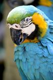 Macaw Royalty Free Stock Photography