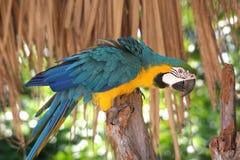 Macaw coloré photographie stock
