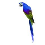 Macaw coloré Photo libre de droits