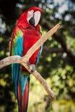 Macaw colorido en el parque zoológico Imagen de archivo