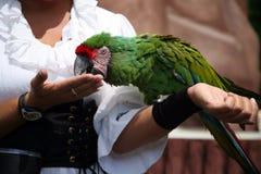 Macaw con el amaestrador fotografía de archivo libre de regalías
