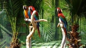 Macaw de los pájaros Fotografía de archivo