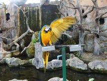 Macaw del azul y del oro en el PARQUE ZOOLÓGICO imagenes de archivo