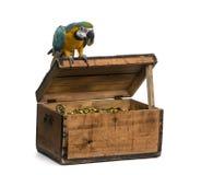 Macaw del Azul-y-oro aislado en blanco Imagenes de archivo