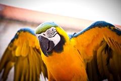 Macaw del escarlata en perca. Hola loro. Fotos de archivo