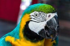 Macaw del loro Imágenes de archivo libres de regalías
