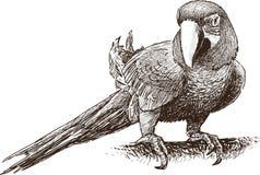 Macaw del loro Imagenes de archivo