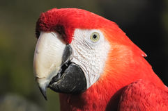 Macaw detail Royalty Free Stock Photos