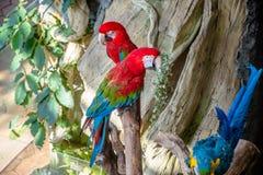 Macaw di prato immagini stock libere da diritti