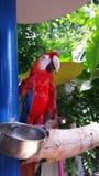 Macaw en el rescate fotos de archivo