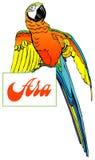 Macaw en la placa Foto de archivo