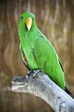 Macaw en la ramificación Imágenes de archivo libres de regalías