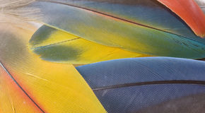 Macaw feathers Royalty Free Stock Images