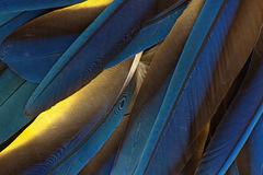 Macaw feathers Royalty Free Stock Photo