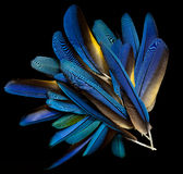 Macaw feathers Stock Images