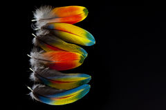 Free Macaw Feathers Stock Image - 27827361