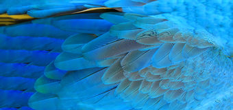 Macaw feathers background royalty free stock photos