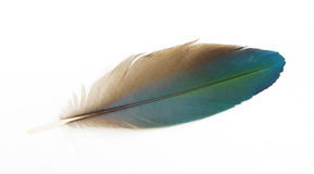 Macaw feathers. Isolate macaw feathers on white background Royalty Free Stock Image