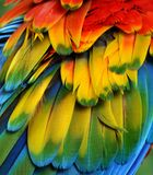 Macaw Feathers (Rainbow) Stock Images